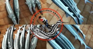 ماهی اوزون برون در بازار