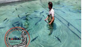 استخر پرورش فیل ماهی