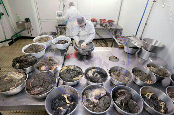 فروشگاه اینترنتی فیل ماهی ایرانی