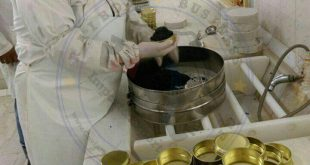 تولید خاویار فیل ماهی