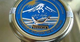 صادرات خاویار بلوگا از ایران