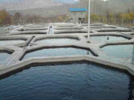 قیمت تولید فیل ماهی آب شور