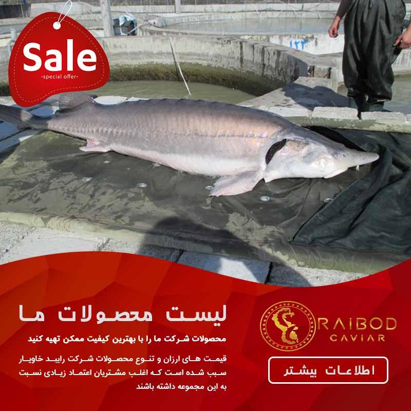 فروش ماهی خاویار یا استروژن در ایران