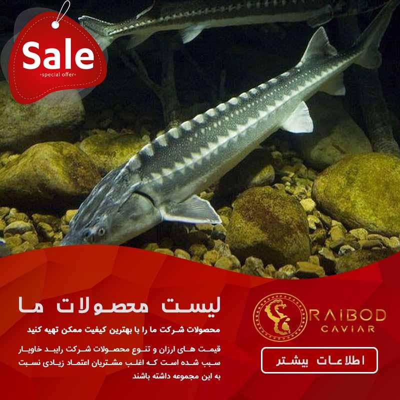 فروش فیل ماهی ایرانی