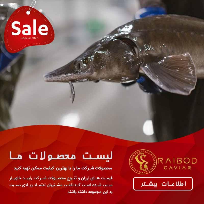 قیمت ماهی خاویار دریای خزر