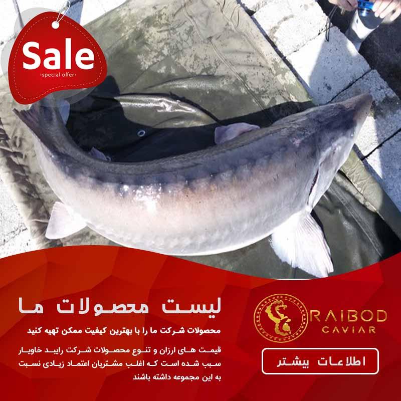 فروش ماهی خاویاری زنده