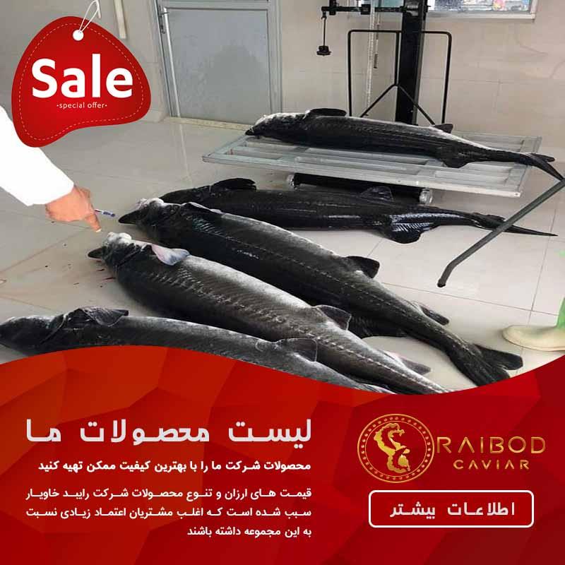 مرکز خرید و فروش فیل ماهی