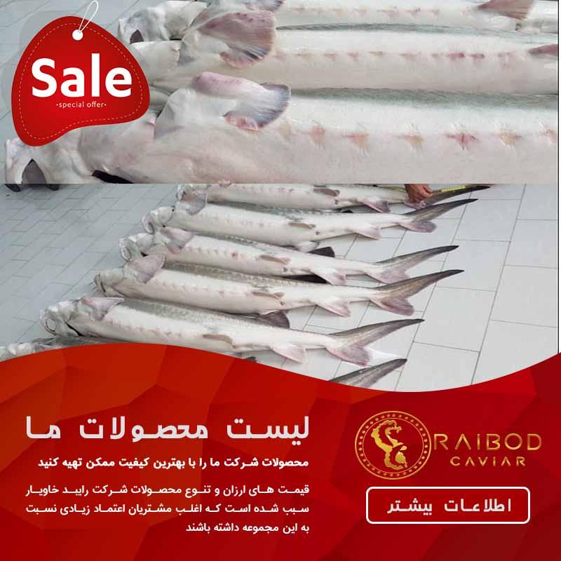 فروش انواع ماهی خاویار با قیمت ارزان