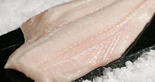 صادرات گوشت خاویار بلوگا
