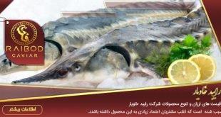 گوشت و خاویار فیل ماهی