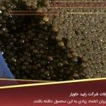 قیمت انواع خاویار ایرانی در بازار