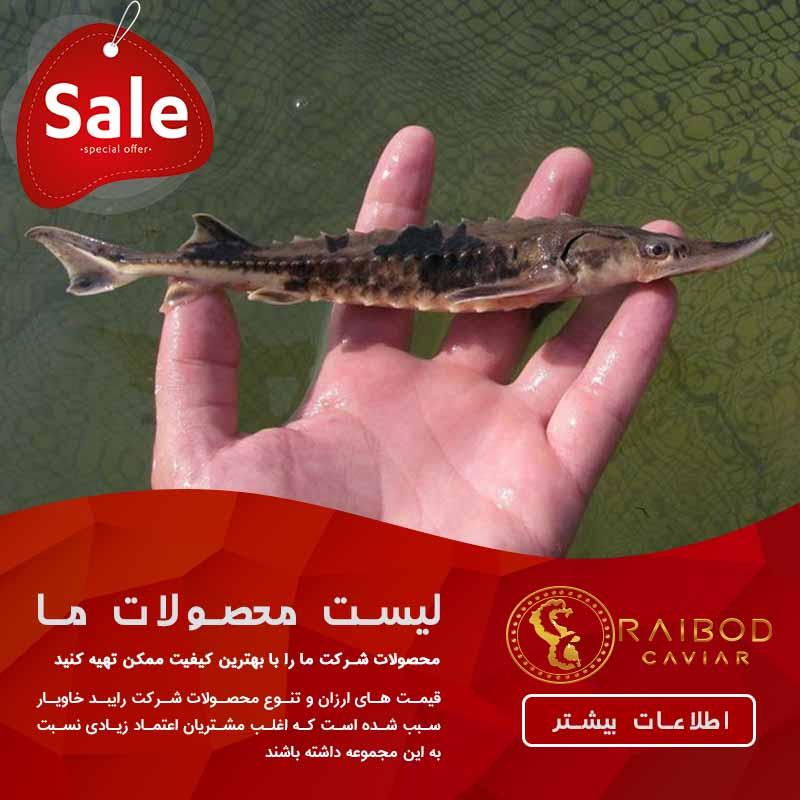 فروش پرورش ماهی خاویار