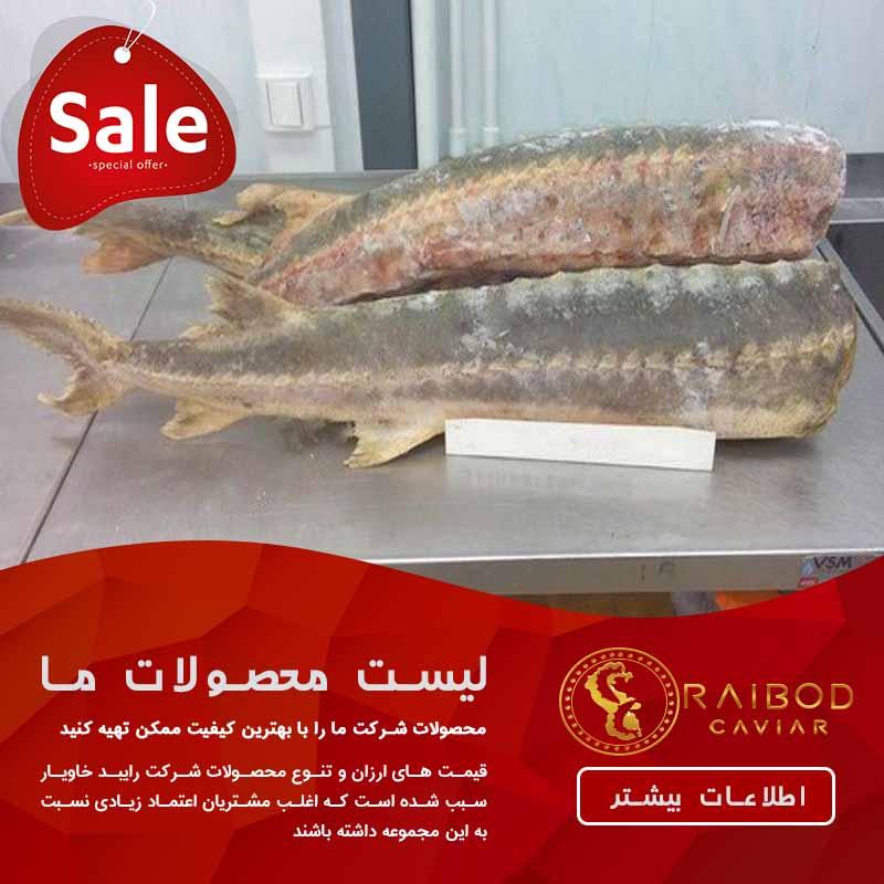 خرید گوشت فیل ماهی
