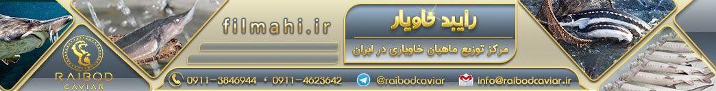 مرکز توزیع ماهیان خاویاری در ایران - رایبد خاویار