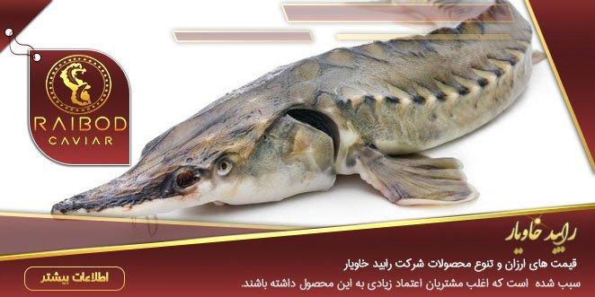 انواع ماهی خاویار ایران