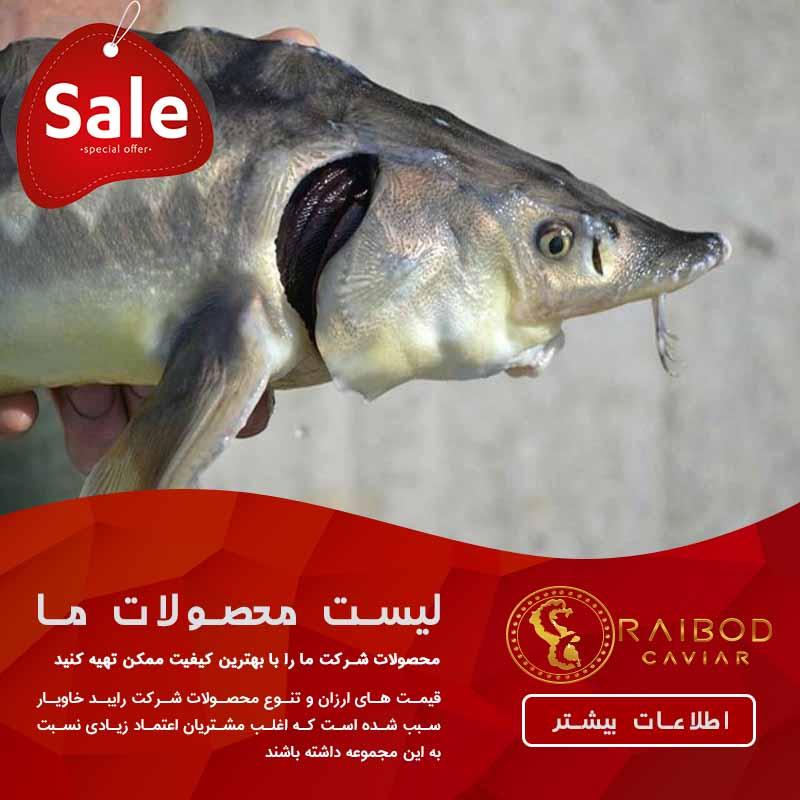 قیمت ارزان انواع ماهی خاویار