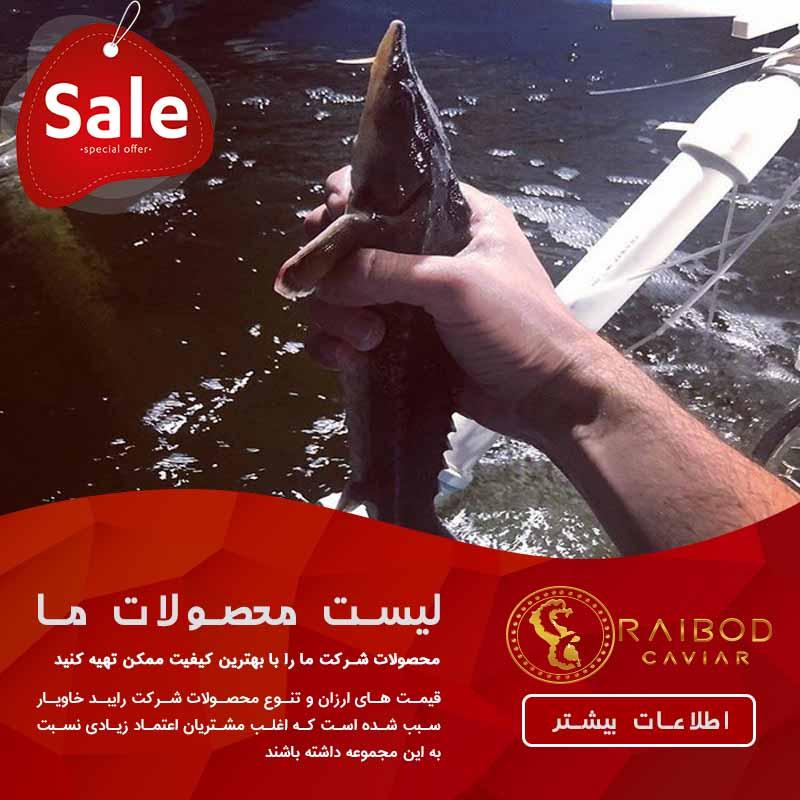 قیمت ماهی خاویار چقدر است