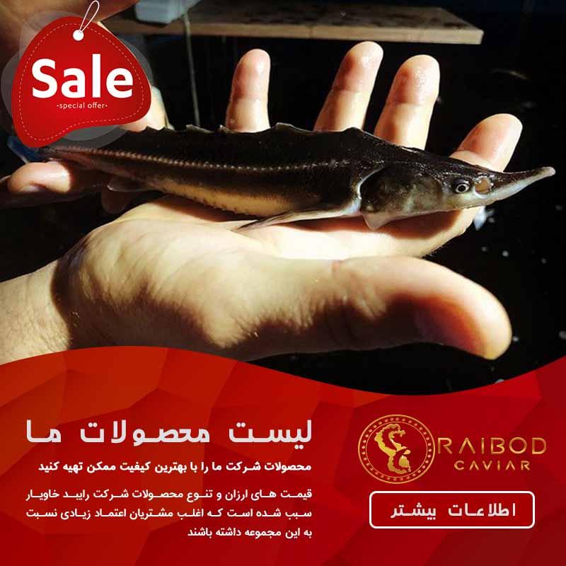 فروش عمده ماهی خاویار در اصفهان