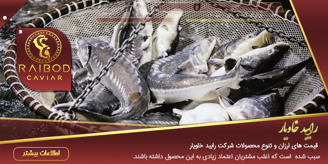 پرورش انواع ماهی خاویار در جنوب