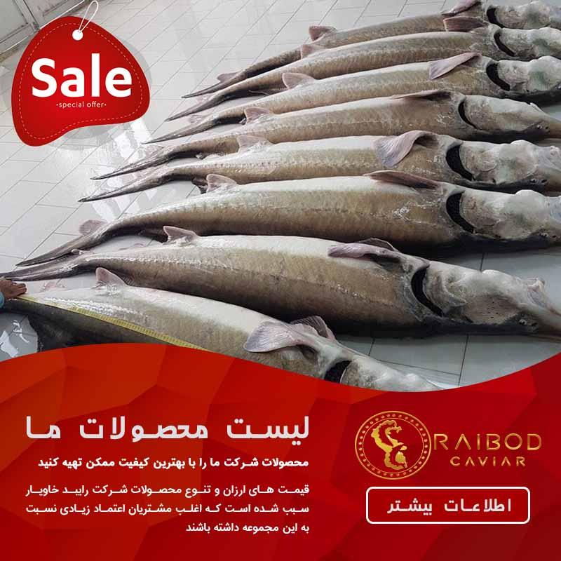 ماهی خاویار سفید