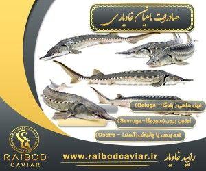 صادرات ماهی بلوگا